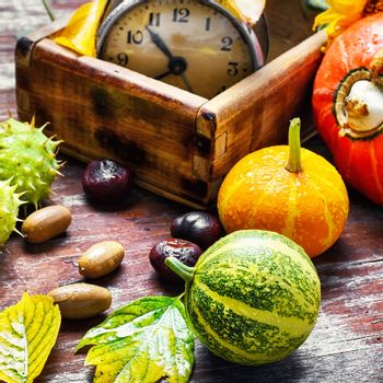Autumn decorative pumpkin,chestnuts and retro clock