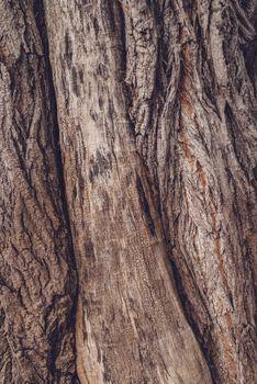 Old tree trunk crust
