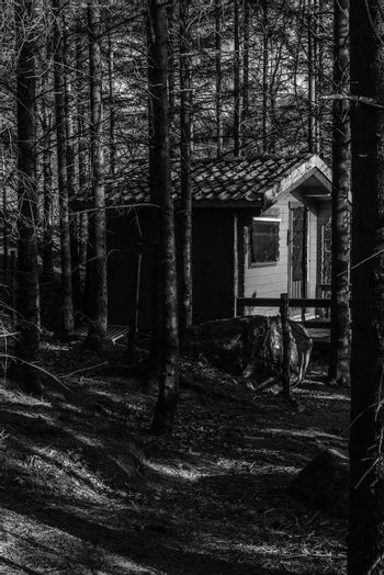 An little cabin among the trees in the forest.