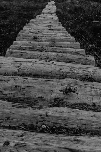The path over the bog.