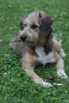 Beautiful dog posing and enjoying in the grass