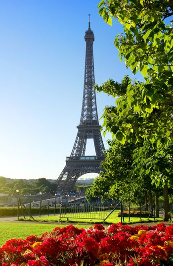 Flower and Eiffel Tower