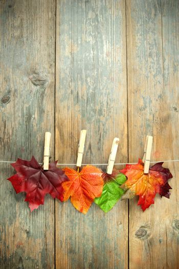 Autumn leaves hanging on a clothes line with pegs against a wooden background