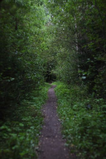 Footpath in forest