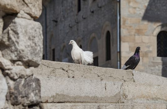 White and black pigeons on stairs in front of a massive building in the background.
