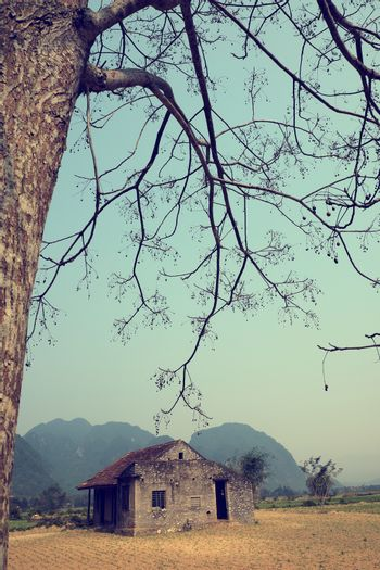 Amazing scene of at Quang Binh countryside,Vietnam. Abandoned stone house under big neem tree in summer, a place for discover tour