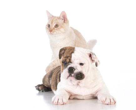 dog and cat isolated on white background