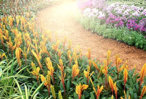 pathway with gardening blooms with burst light