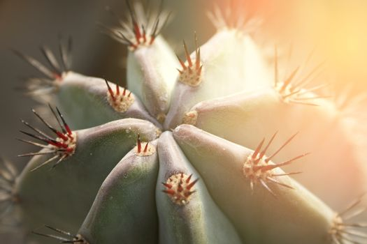 Close up of cactus with long thorns with burst light