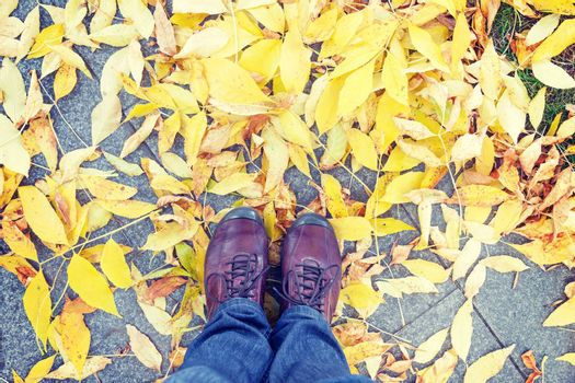 Legs and shoes from above against yellow leaves at autumn