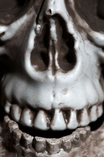 Close-up vertical photo of the human skull