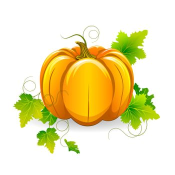 Pumpkin with leaves on a white background.