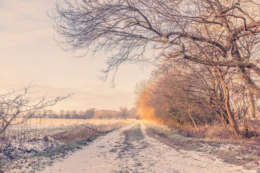 Nature path at wintertime in the sunrise