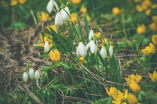 Springtime flora in a garden