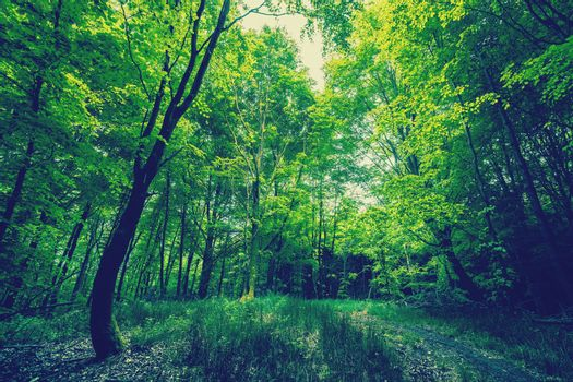 Magical green forest in daylight
