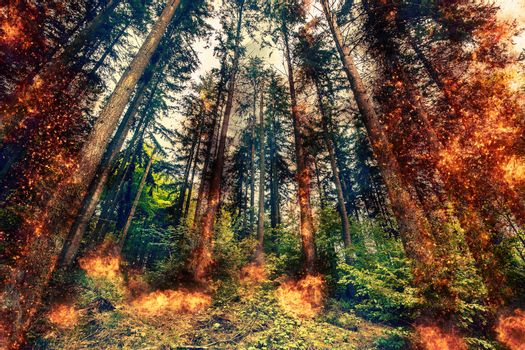 Fire in a forest at daytime