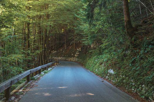 Empty winding road in Julian Alps forest