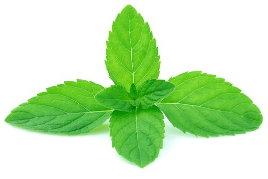 Nausea & Headache: Mint leaves, especially freshly crushed leaves helps you deal with nausea and headache. The strong and refreshing aroma of mint is a quick and effective remedy for nausea.
