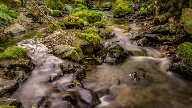 Gentle Creek in a Forest