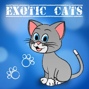Exotic Cats Meaning Feline Pets And Puss