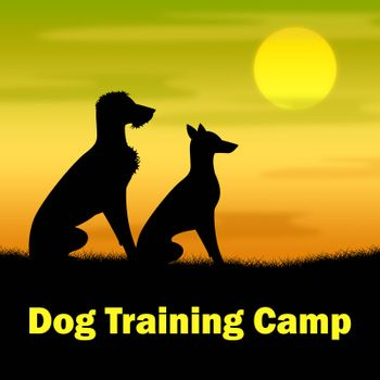 Dog Training Camp Indicating Trainer Coach And Dogs