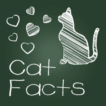 Cat Facts Representing Cats Knowledge And Feline