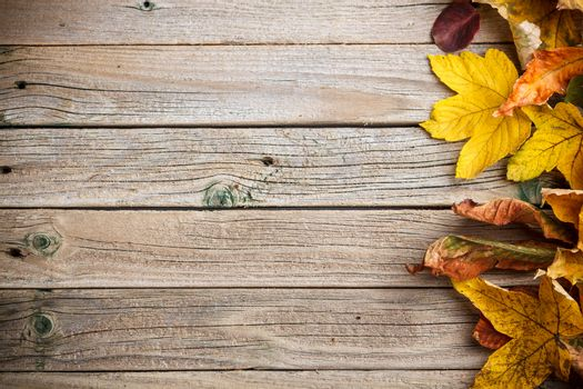 Autumn leaves over wooden background with copy space