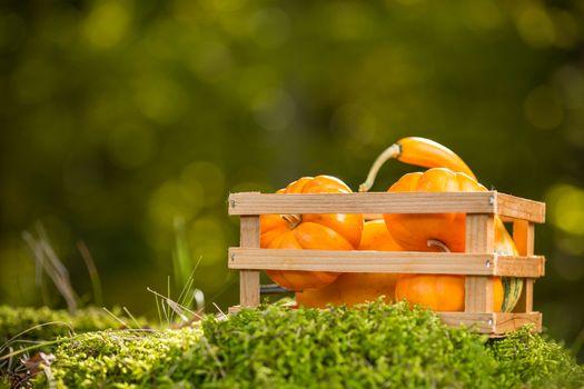 Small ornamental pumpkins