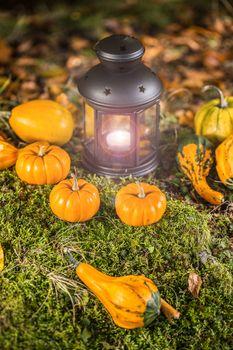 Halloween ornamental pumpkins