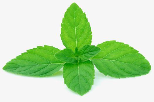 Nausea & Headache: Mint leaves, especially freshly crushed leave