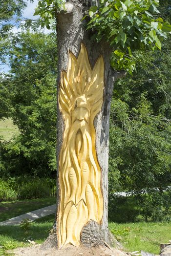 tree engraving in tarbert park on the wild atlantic way ireland