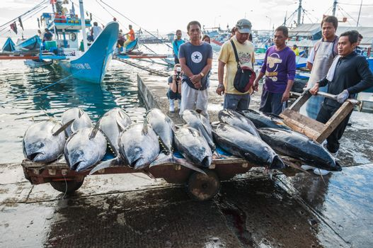General Santos City - September 1, 2016: Yellowfin tuna being unloaded at the Tuna Harbor in General Santos City, South Cotabato, The Philippines. General Santos is the Tuna Capital of The Philippines, and the tuna industry is an important contributor the the city's economy with export worldwide.