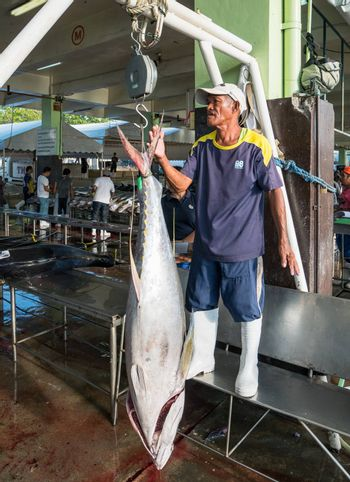 General Santos City - September 1, 2016: Yellowfin tuna being weighed at the Tuna Harbor in General Santos City, South Cotabato, The Philippines. General Santos is the Tuna Capital of The Philippines, and the tuna industry is an important contributor the the city's economy with export worldwide.