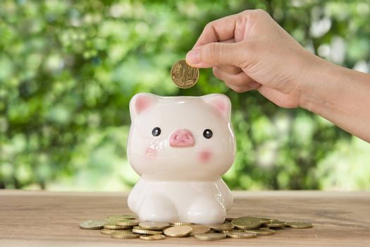 hand's women putting golden coin in Piggy bank. account concept,business concept,finance concept.