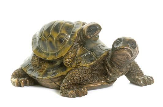 ceramics turtle in studio