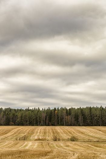 Farm Field with Trees and a cloudy sky.