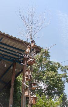 Wooden bird houses hanging on tree, stock photo