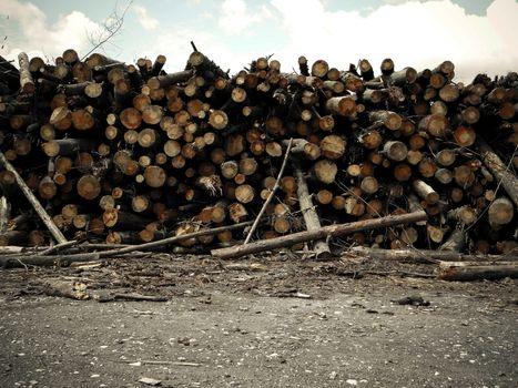 Lots of logs lie timber logging