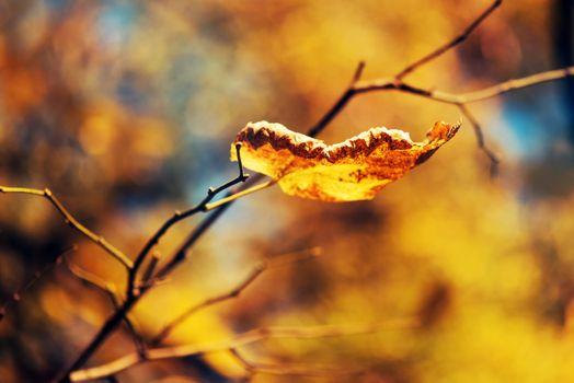 Dry leaf on the branch, fall season