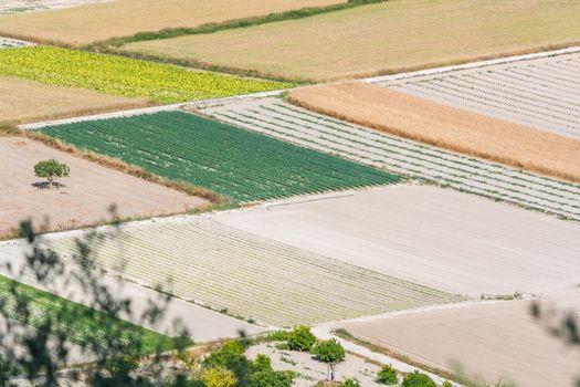 Various fields in Mallorca, Spain