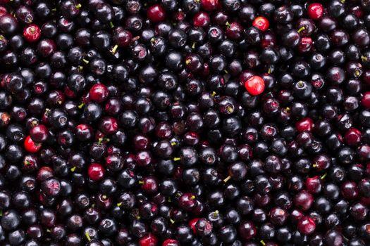 Thailand fresh blueberries