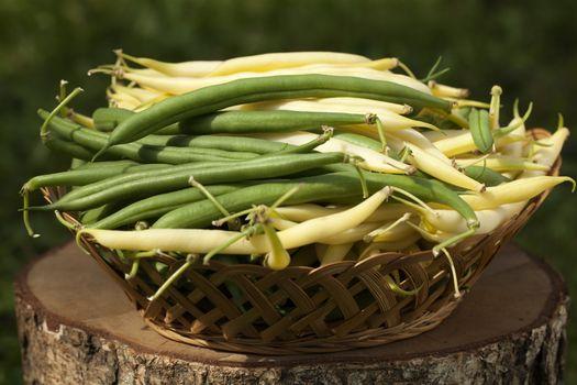bean in basket
