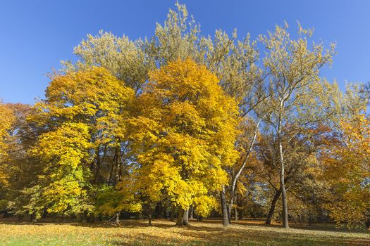Autumn in the park, colorful trees