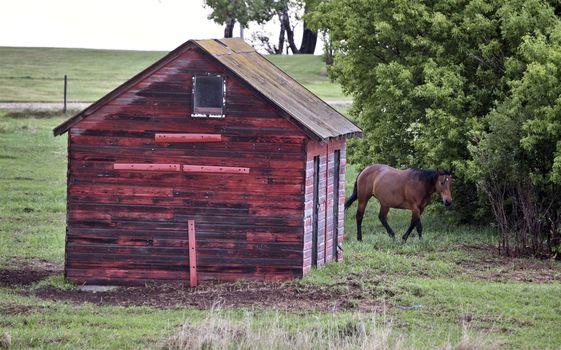 Horse in Sasklatchewan