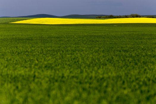 Saskatchewan Field Farming