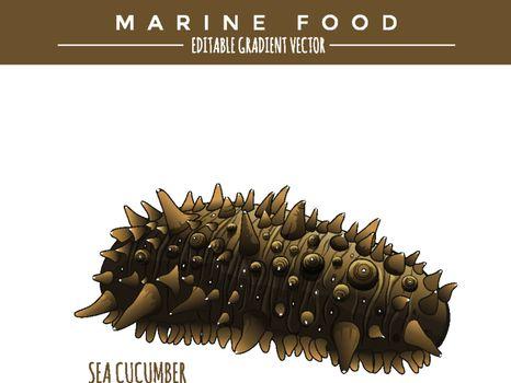 Sea Cucumber. Marine Food