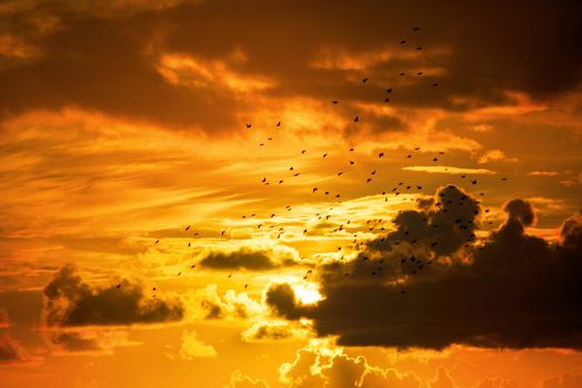 flocks of starlings flying into a bright orange sunset sky in the wild atlantic way