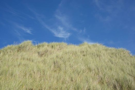 large green sand dunes on the ballybunion golf course in ireland