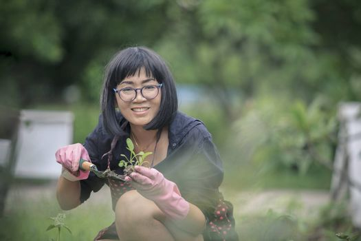 asian woman planting organic vegetable at  home garden ,people healthy leisure lifestyle