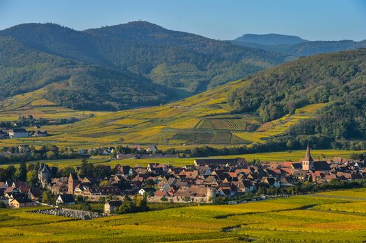 Vineyard and townscape Kaysersberg, Alsace in France